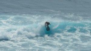 surf instructor, surf teacher, surf, surfer, surfing